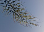 palm tree, branch, exotic