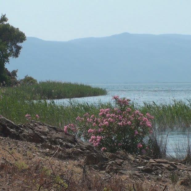 Lake Köyceğiz