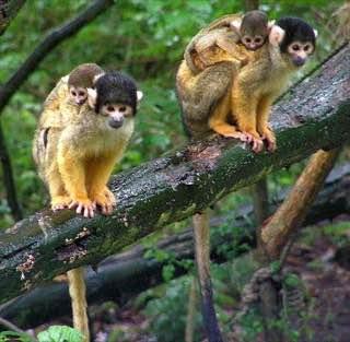 Apenheul Primate Park, netherlands , aruba