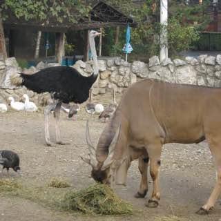 Belgrade Zoo, serbia , belgrade