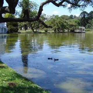 Parque Tres de Febrero, argentina , buenosaires