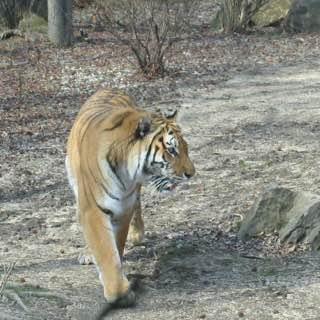 Lion Country Safari, usa , floridasouthern