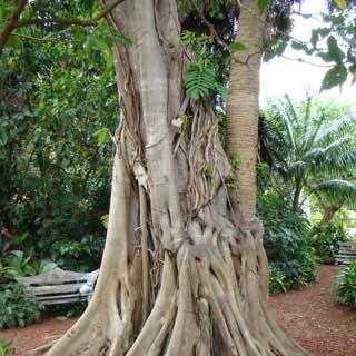 Mounts Botanical Garden, usa , floridasouthern