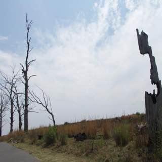 Rietvlei Nature Reserve, southafrica , johannesburg