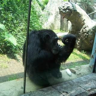 Chapultepec Zoo, mexico , mexicocity