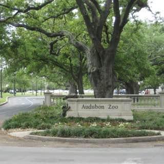 Audubon Zoo, usa , neworleans