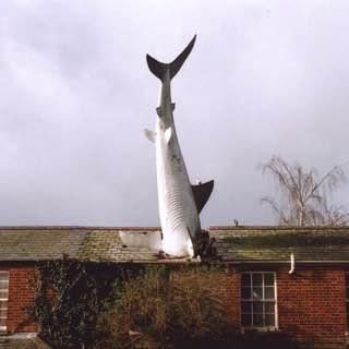 The Headington Shark, uk , oxford