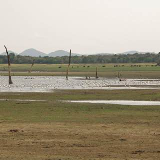Minneriya National Park, srilanka , sigiriya