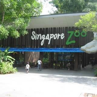 Singapore Zoo, singapore , silosobeach
