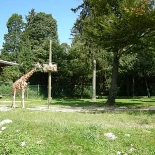 Ljubljana Zoo, slovenia , sloveniadomestic