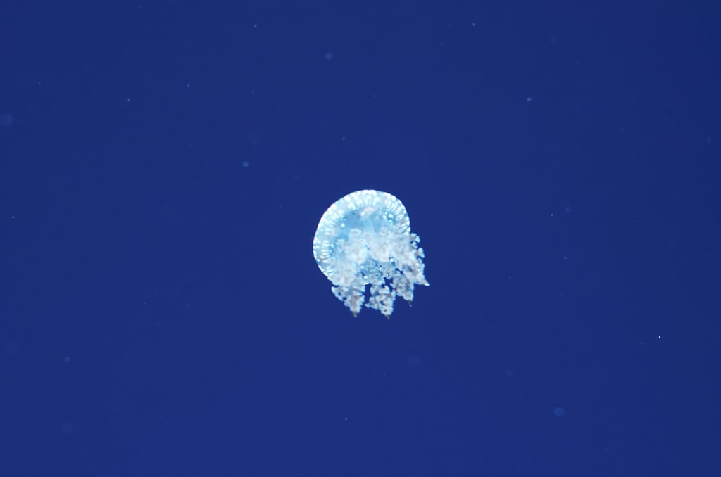 Ripley's Aquarium of Canada の画像. sea fish toronto ontario canada fall aquarium marine tank under jelly sharks animalplanet 2013 ripley's