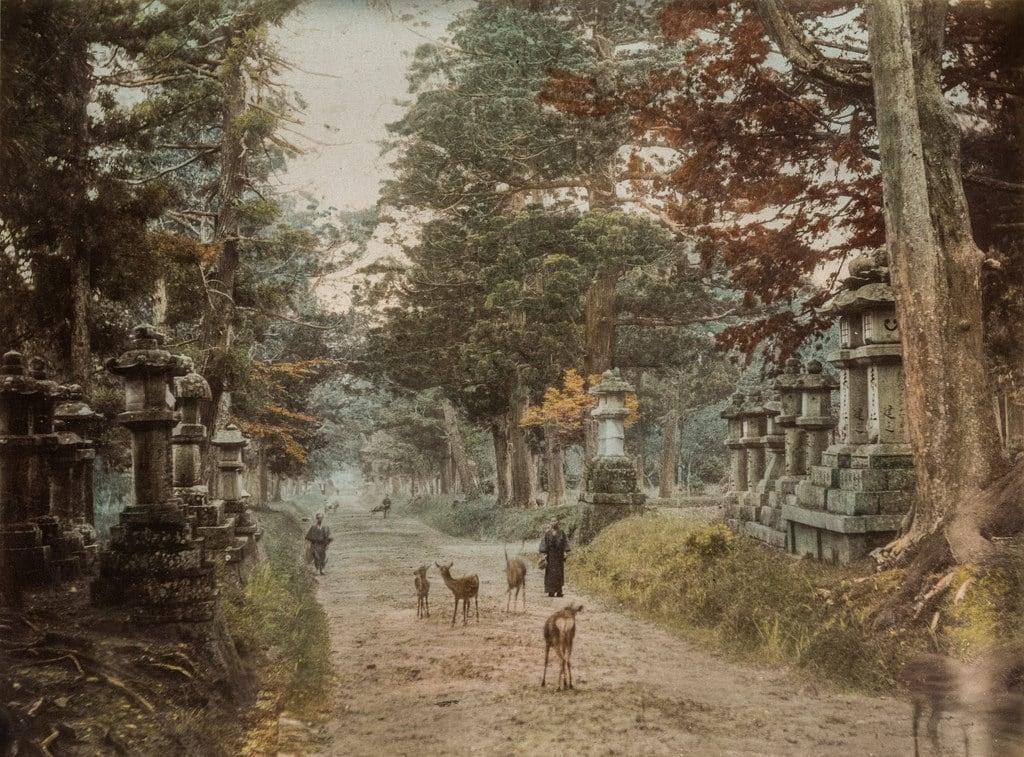 Kasuga Shrine 的形象. color monument paperprint handcolored albumen