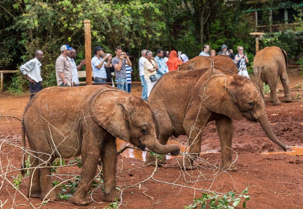 Εικόνα από David Sheldrick Elephant Orphanage. elephant kenya wildlife nairobi elephantorphanage nairobinationalpark davidsheldrick