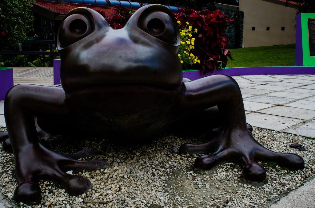 Bild von Camuy Caves. puertorico andrew frog caves pr cave lares peurtorico hatillo claracave parquedelascavernasdelríocamuy riocamuycavepark camuyrivercavepark
