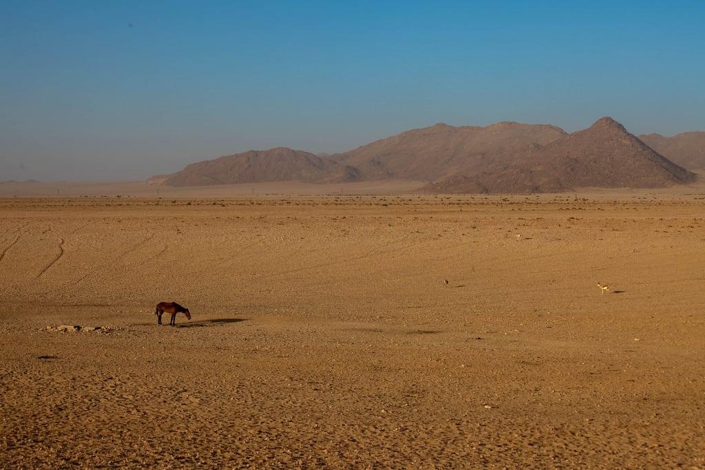 Attēls no Garub Wild Horses. vacation desert roadtrip namibia namib