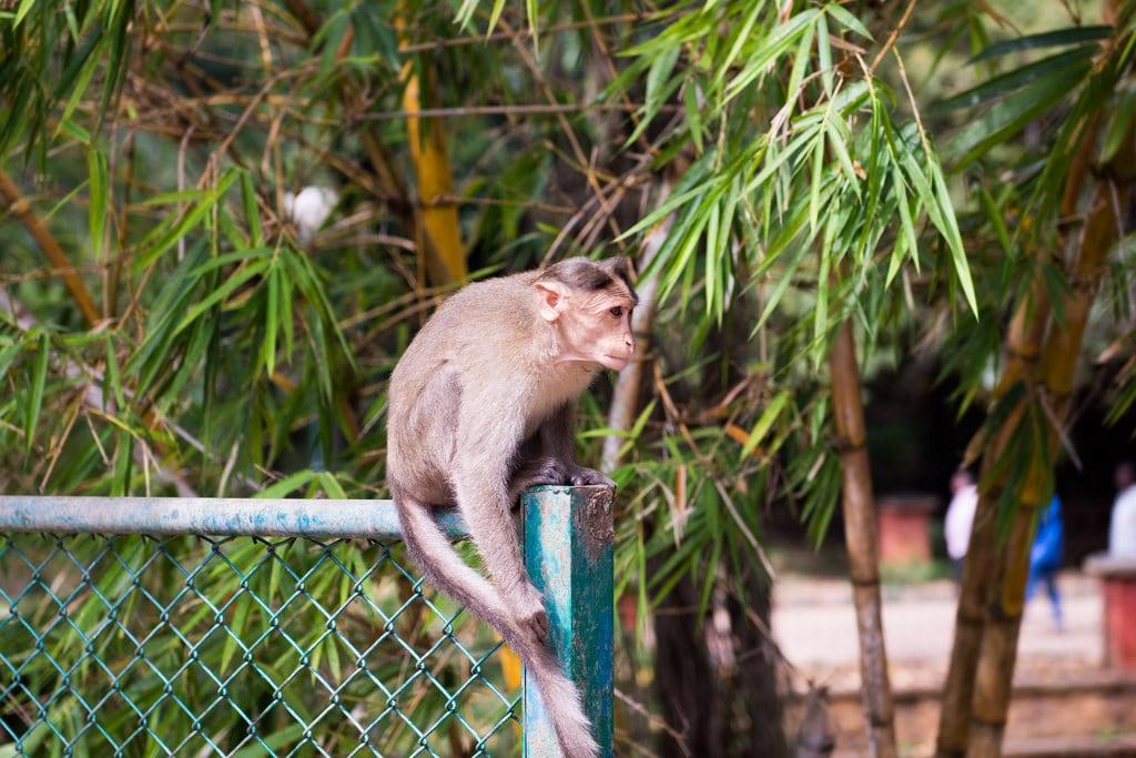 Изображение Lalbagh Botanical Gardens. lalbaghbotanicalgarden bengaluru karnataka india in