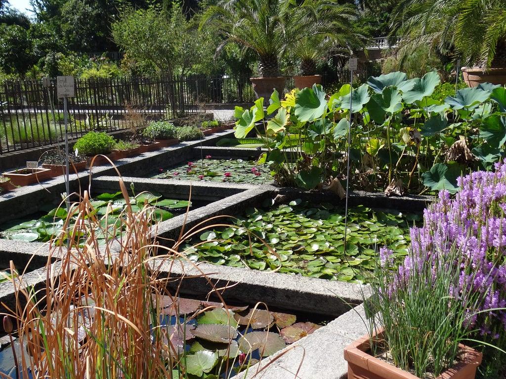 Bild av Orto Botanico di Padova. veneto italië september herfst 2016 1001tuinen 1001gardens unescowerelderfgoed botanischetuininpadua