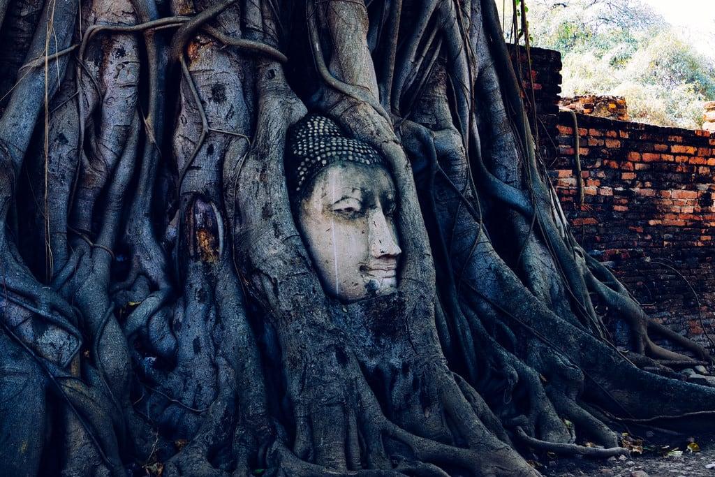 תמונה של Wat Phra Mahathat. watmahathat buddha ancientruins thai ayutthaya statue ilce7m2 thailand テーサバーンナコーン changwatphranakhonsiayuttha タイ テーサバーンナコーン・プラナコーンシーアユッタヤー changwatphranakhonsiayutthaya th