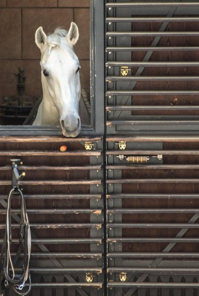 Obraz Hofburg Palace. austria equestrian hofburg horse lipizzaner spanishridingschool stables stalburg vienna wien