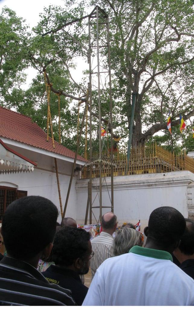Εικόνα από Jaya Sri Maha Bodhi. srilanka anuradnapura jayasrimahabodhi