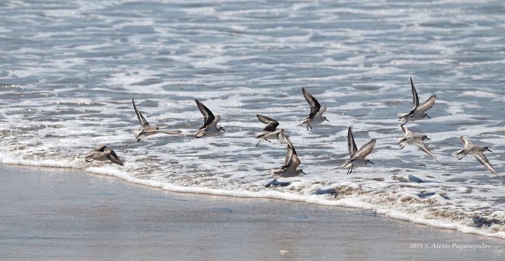 תמונה של Playa Norte. nikon nikond5100 mexiko méxico mexique mazatlán mexico sinaloa strand