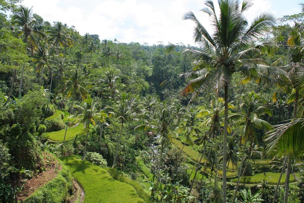 Εικόνα από Gunung Kawi. trees bali green indonesia landscape temple rice terraces jungle lush gunung hindu kawi