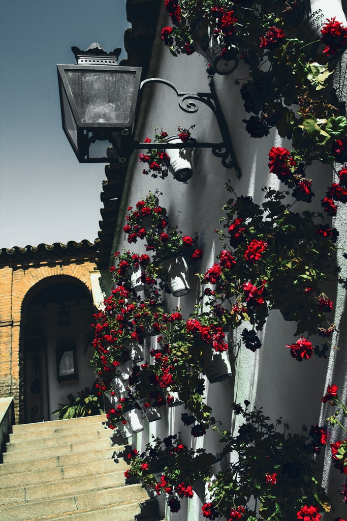 Obraz Zoco Municipal. flowers wall stairs spain courtyard andalucia cordoba geranium córdoba esp calledelosjudíos zocomunicipal nellumazilu